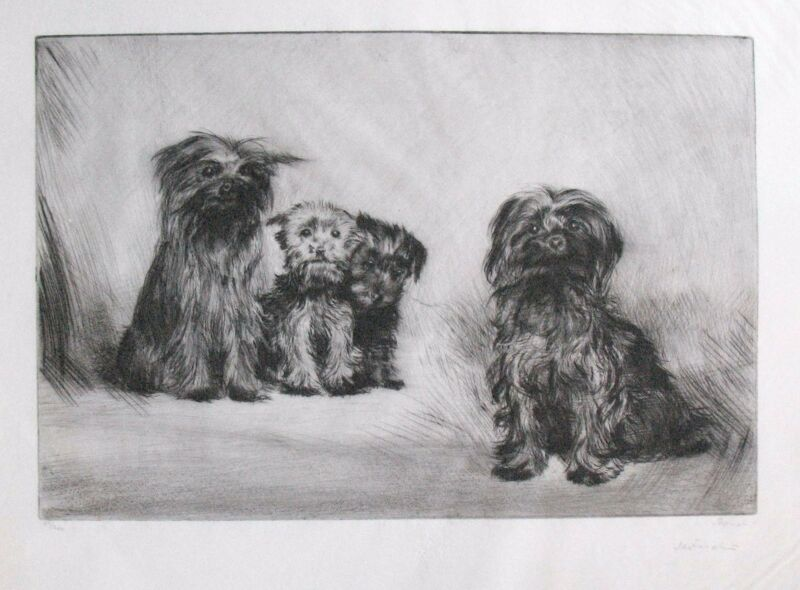 Vintage Original European Dog Etching - Terrier Family Portrait with Puppies