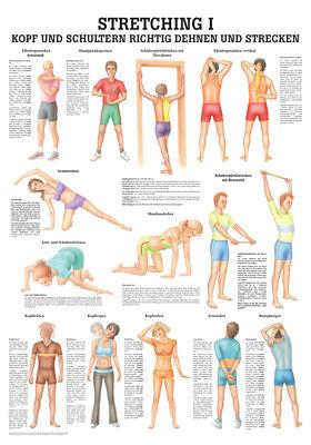 Rüdiger Anatomie Stretching 1 Poster 24cm x 34cm NEU & OVP