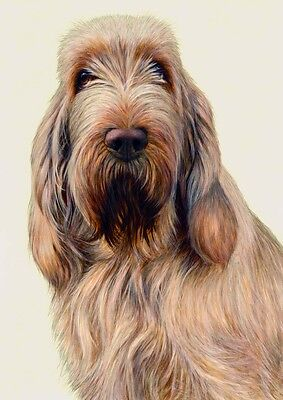 Nigel Hemming JUST DOGS - WHITE & ORANGE ITALIAN SPINONE Spinoni Gun Dogs Art
