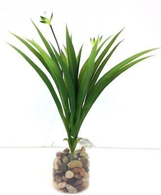Tall Green Grass (Tropical Grass Bush~Green~15