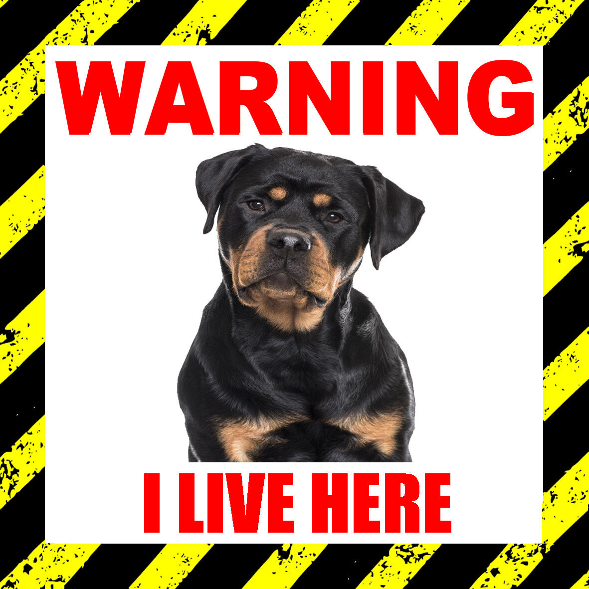 Details about warning i live here rottweiler door window sticker dog pet animal