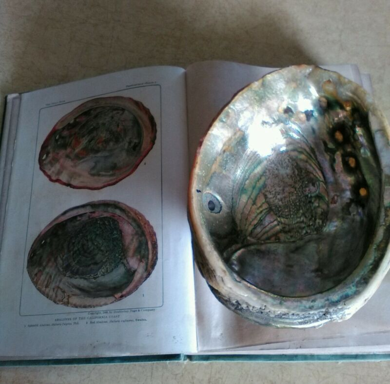 "1908 ""1st edition"" The Shell Book by Julia E. Rogers with Abalones of California"