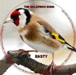 PURE ENGLISH GOLDFINCH SONG CD - EASTY (BEST ON EBAY)