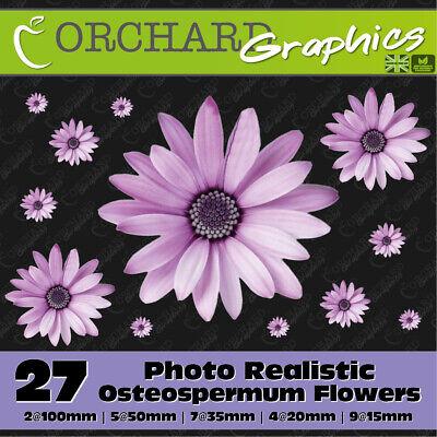 27 Osteospermum Gerbera Daisy Flower Car Stickers Vinyl Decal Bedroom Wall Art