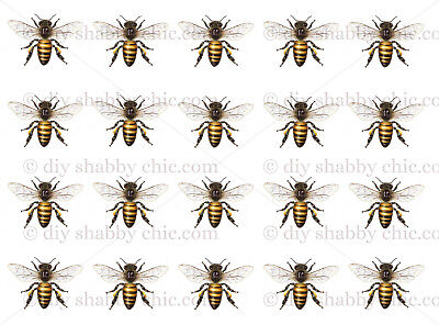 Furniture Decal Image Transfer Vintage Honey Bee Insect Wings Label diy Sting ()