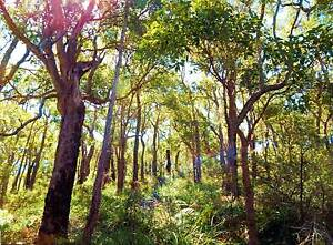 Bush Block Beauful, Big Wood, Rare,  URGENT SALE MUST SELL NOW!!! Forest Grove Margaret River Area Preview