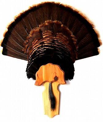 A.M.M RED OAK TURKEY FAN//BEARD MOUNTING KIT Blank ADD YOUR OWN PHOTO OR STAMP