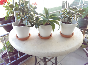 Small potted plants x 4 TOTAL price $15 Nelson Bay Port Stephens Area Preview