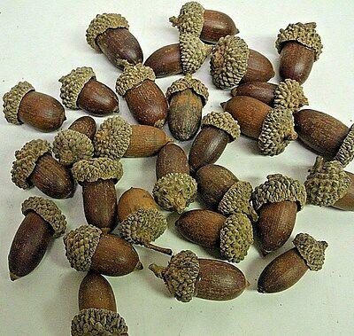 24+ Artificial Acorns Fall Autumn Thanksgiving Crafts Home Nature Decor