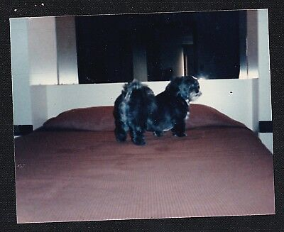 Antique Vintage Photograph Adorable Puppy Dog Standing on Bed