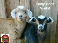 This is the week! Little Tracks starts baby goat visits!