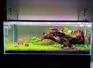 Beautiful Freshwater Aquarium - Full Setup! Nothing spared! $5k Wiley Park Canterbury Area Preview