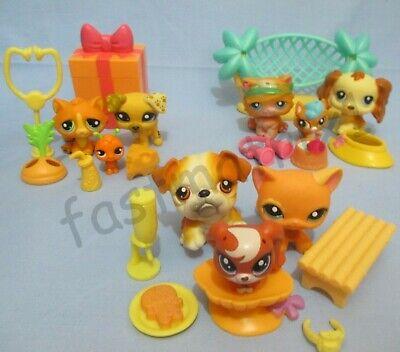 Littlest Pet Shop Random Lot Orange Cat Dog Baby 8 Pcs 3 LPS 5 Accessories Gift