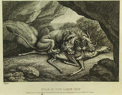 "!Antique c.1808 B&W Engraving ""Stag in Lion's Den"" by S. Howitt, London Print"