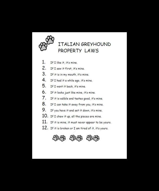 Italian Greyhound Dog Art Print - Matted - P/L