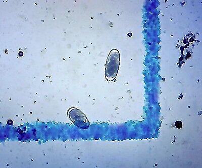 4 Mcmaster Microscope Slides  15Ea Worm Egg Count   Livestock Parasite Testing