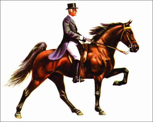 "Sticker 4""x 5"" Tennessee Walking Horse ,Equestrian,Cowboy, Cowgirl, Show Horse"