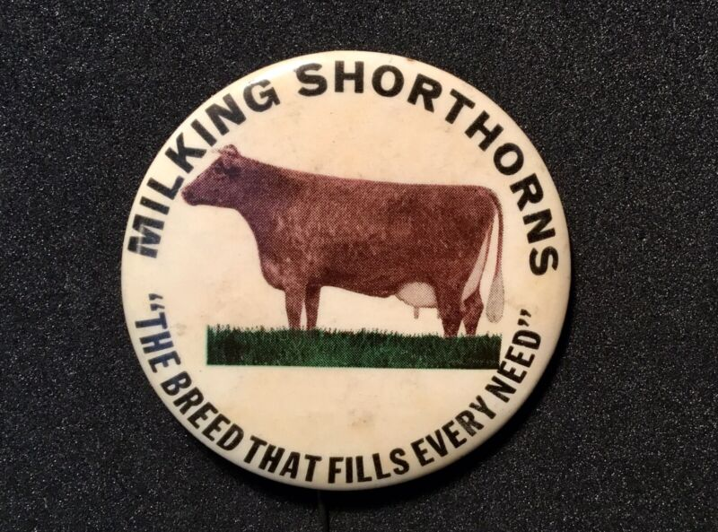 American Milking Shorthorn PINBACK The Breed That Fills Every Need 1950