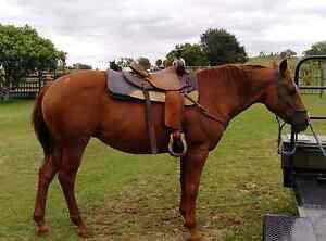 Western saddle Hatton Vale Lockyer Valley Preview