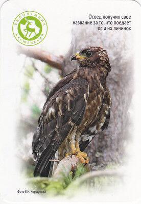 2016 Eagle beeseater wild bird Russian modern pocket calendar
