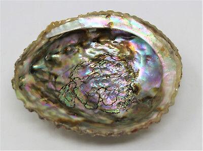 "Large 5-6"" Abalone Sea Shell For Smudging Burning Sage Sticks Incense Display"