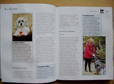 Le chien le setter anglais origine standard soins conseil le chiot /h7