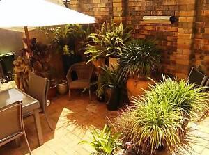 Light Loft Apartment in Terrace House Bondi Junction Eastern Suburbs Preview