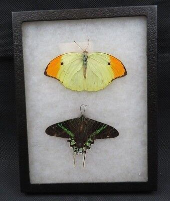 Vintage 2 Real Butterflies Butterfly Handmade Framed Box Natural Taxidermy for sale  Shipping to Canada