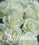shantaes