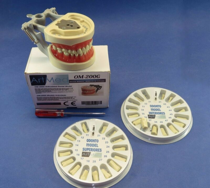 Typodont 200G Type NISSIN Universal Plate + kit Replacement Teeth Upper / Lower