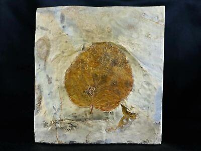 Detailed Davidia Antiqua Fossil Plant Leaf Paleocene Age Fort Union Glendive, MT