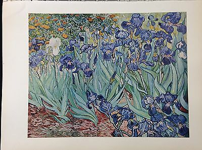 "1950 Vintage Full Color Art Plate ""IRISES"" by VAN GOGH A GORGEOUS Lithograph"
