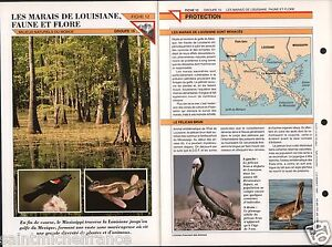 "Faune Flore Fauna Marais de Louisiane Pélican Brun Rat Musqué Héron FICHE FRANCE - France - PORT GRATUIT A PARTIR DE 4 OBJETS BUY 4 ITEMS AND WORLDWIDE SHIPPING IS FREE EXCEPT USA, CANADA, AMERICA ONLY TRACKING MAIL FICHE TECHNIQUE, SPECIFICATION SHEET PAPIER GLACÉ, GLAZED PAPER RECTO-VERSO FORMAT 35 CM X 23,5 CM SIZE : 12.06"" X 8.28""  - France"