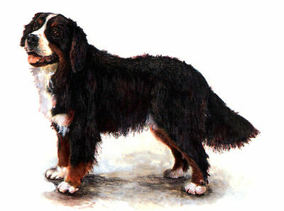 BERNESE MOUNTAIN DOG STANDING DOG LOVELY GREETINGS NOTE CARD