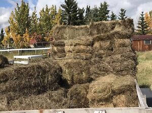 $5 small grass hay bales