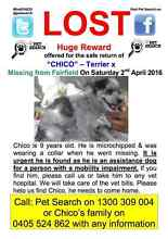 Have you seen Chico??? Missing from Fairfield area 2/4/16 Fairfield Fairfield Area Preview