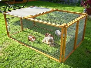 Guinea Pig/Rabbit Starter Kit Evandale Norwood Area Preview