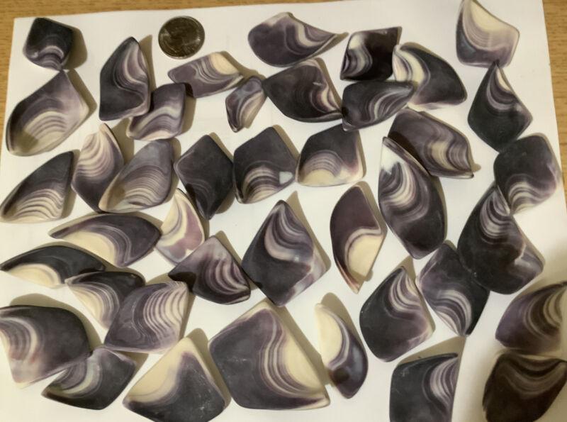 New Matte Finish wampum quahog shells beautiful color and finish