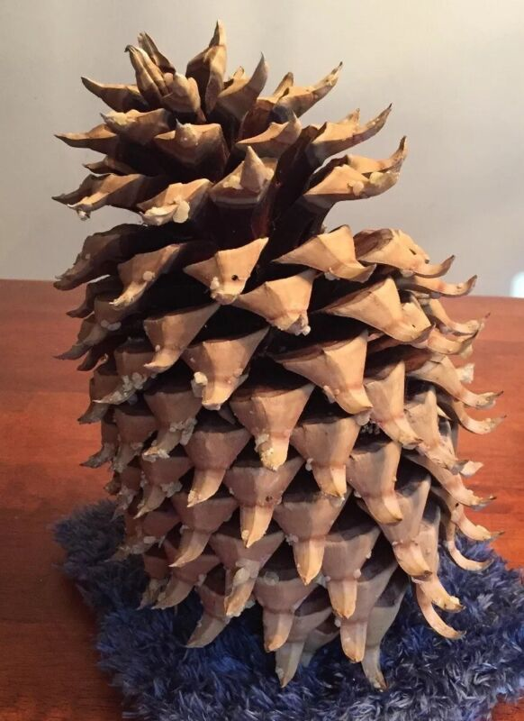 """10"""" Coulter """"Widowmaker"""" Pine Cone"""