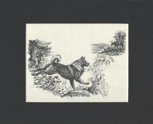 NORWEGIAN ELKHOUND - 1964 Dog Art Print - MATTED