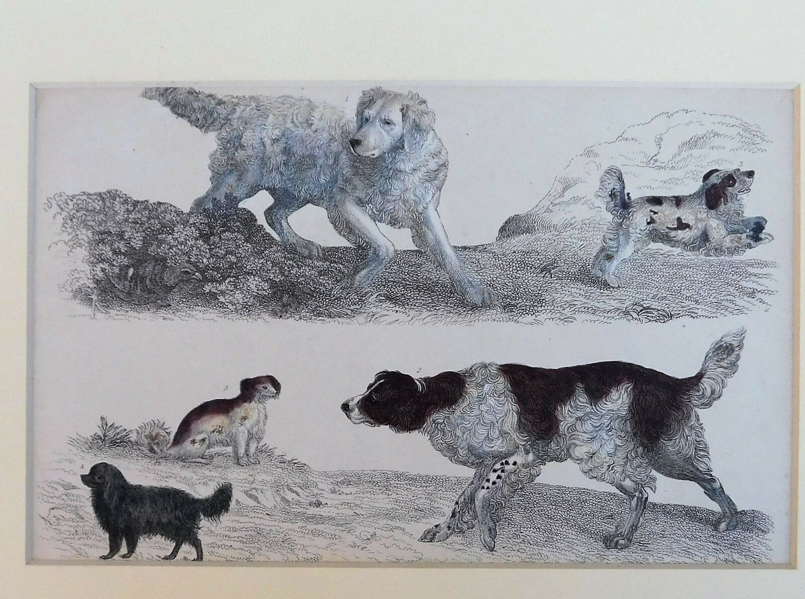 Vintage engraving of gun dogs retrievers old breed of dog animal picture mounted