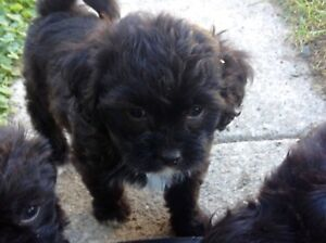 *~*~*PUPPIES FOR SALE*~*~*