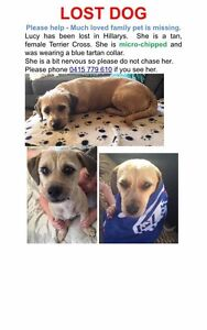 $500 reward lost Dog LUCY Hillarys Joondalup Area Preview