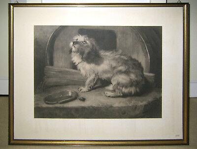Tierportrait Hundebild von Sir Edwin Landseer Lithographie Stich Norwich Terrier - Sir Edwin Landseer