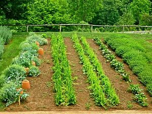 25-HEIRLOOM-GARDEN-VEGETABLE-SEEDS-NON-GMO-HYBRID-ORGANIC-SURVIVAL-SEED-BANK-SET