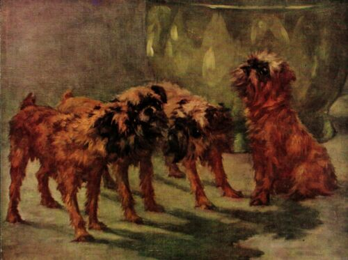1930s Antique Brussels Griffon Print Maud Earl Park Place Dog Art  3748d