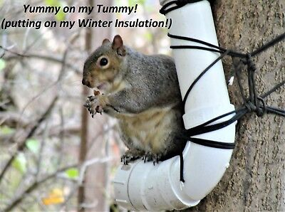 Squirrel and Bird Feeder Made With 2 Inch PVC Pipe