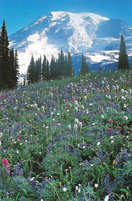 Washington Cascades (Postcard Washington State Cascades Mazama Ridge & Alpine Wildflowers MINT)