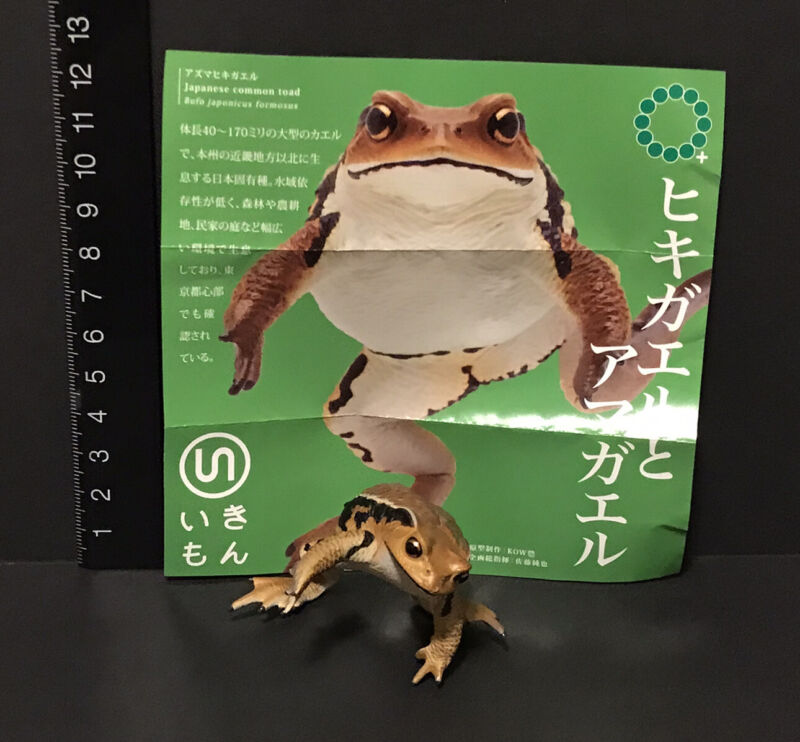 Kitan Club Japan Exclusive Japanese Brown Common Toad Frog Magnet Figure