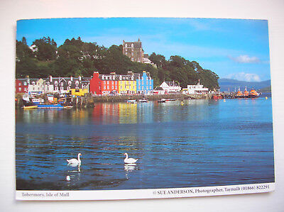 Mull - Tobermory Bay. (Sue Anderson - Judges)